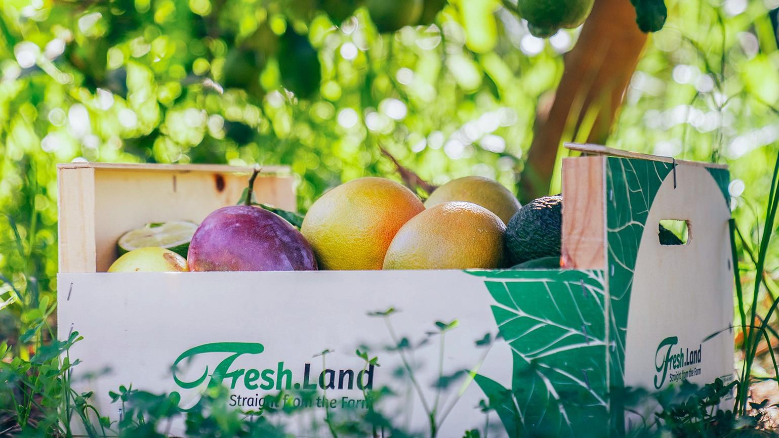 Micro-Greens Danmark og Freshland